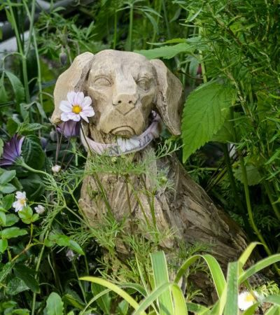 Year of the Dog in your canine-friendly garden