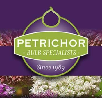 Petrichor Bulbs