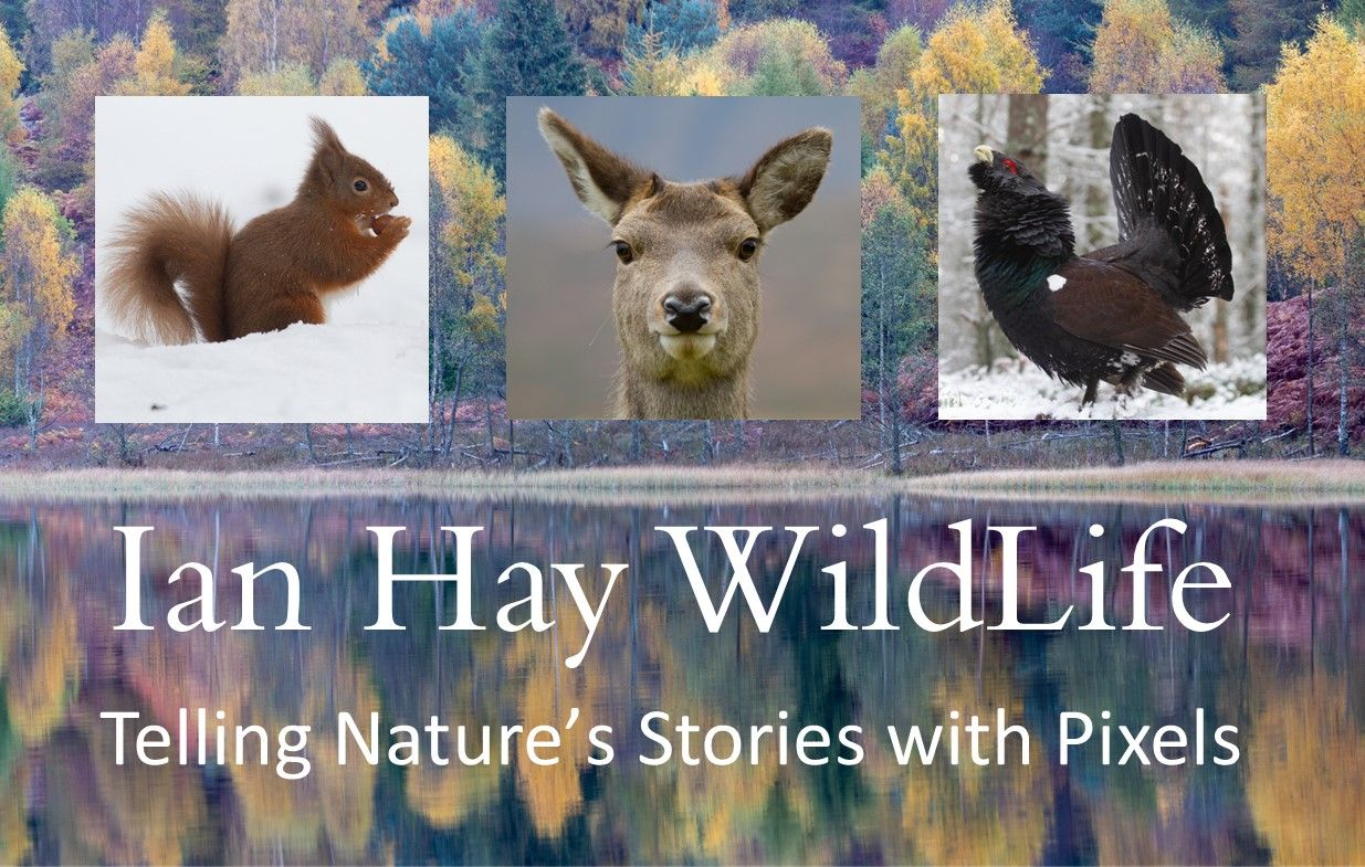 Ian Hay Wildlife